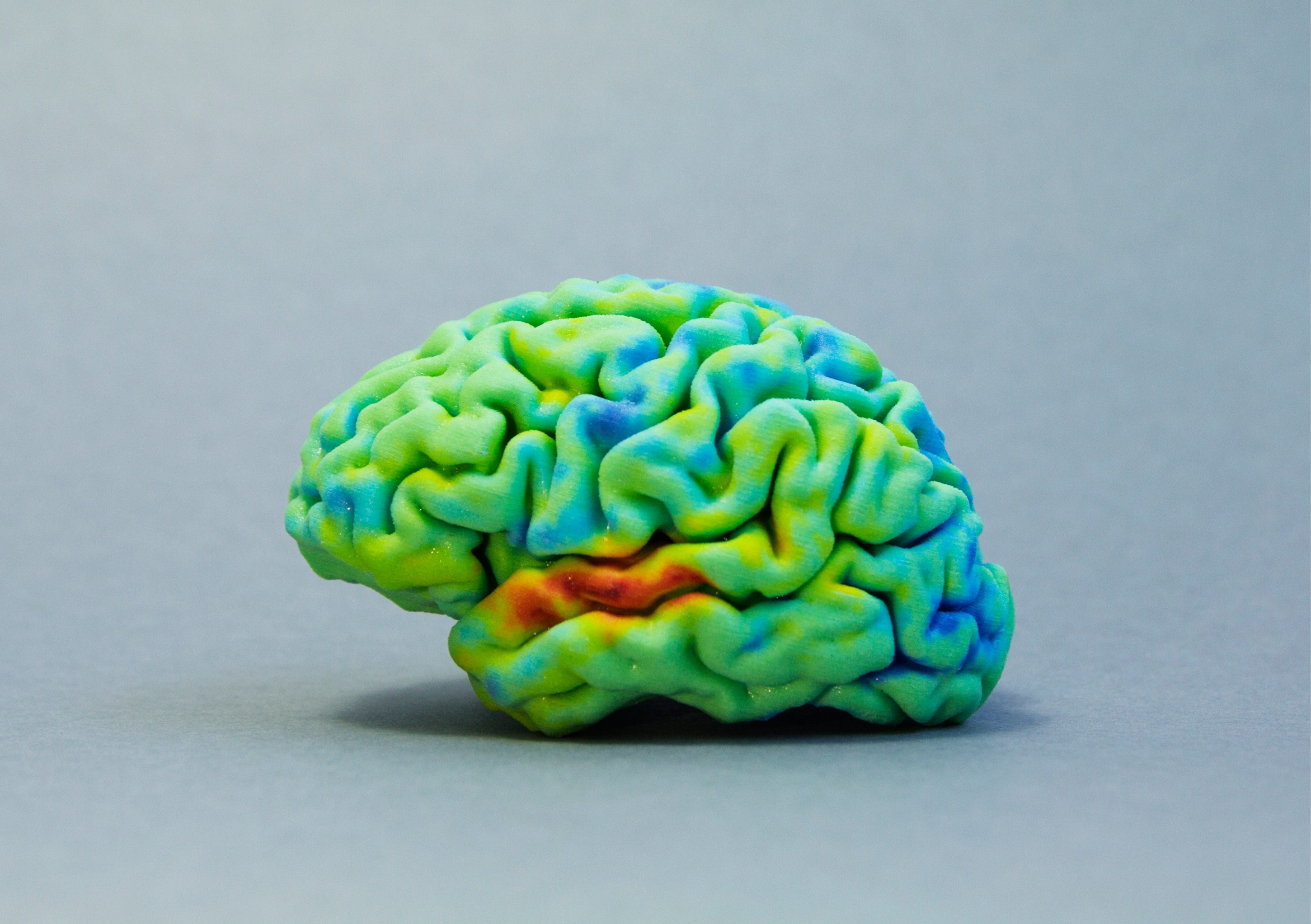3D printed brain in multicolor