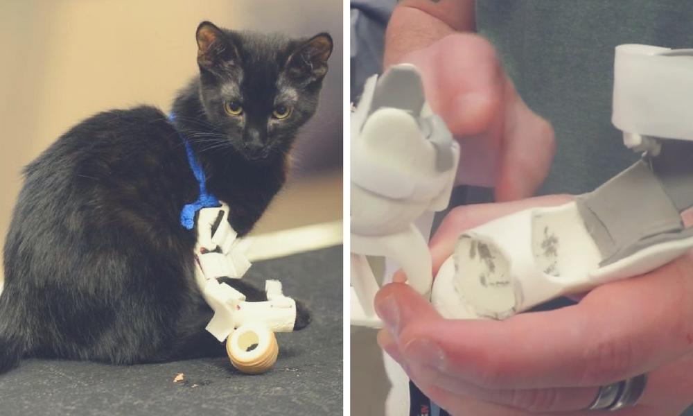 Animal prostheses