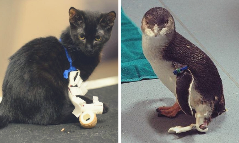 3D Printed Prosthetics: 8 Incredible Animal Prostheses