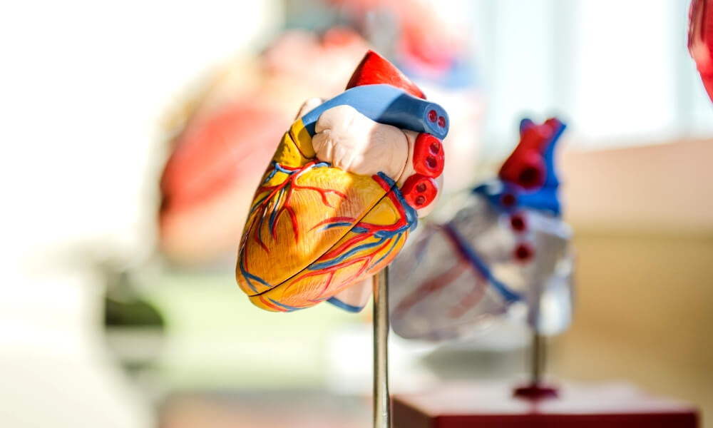The most promising 3D printed organs projects (2021 Update)