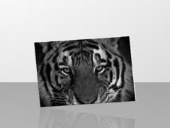 tigre relief