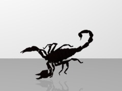 scorpion