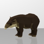 Baird's-Tapir
