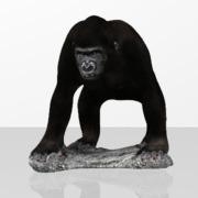 Animal Singe Gorille