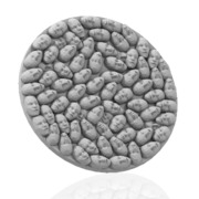 50mm Stone Face Base Insert