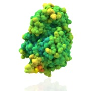 THI Protein