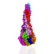 Fusion F Glycoprotein PostFusion