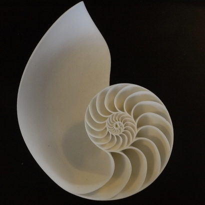 Nautilus Seashell_Left Hand Side
